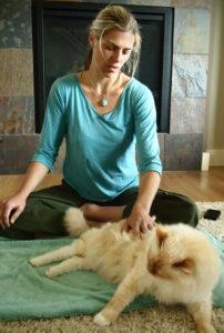 cat_acupuncture